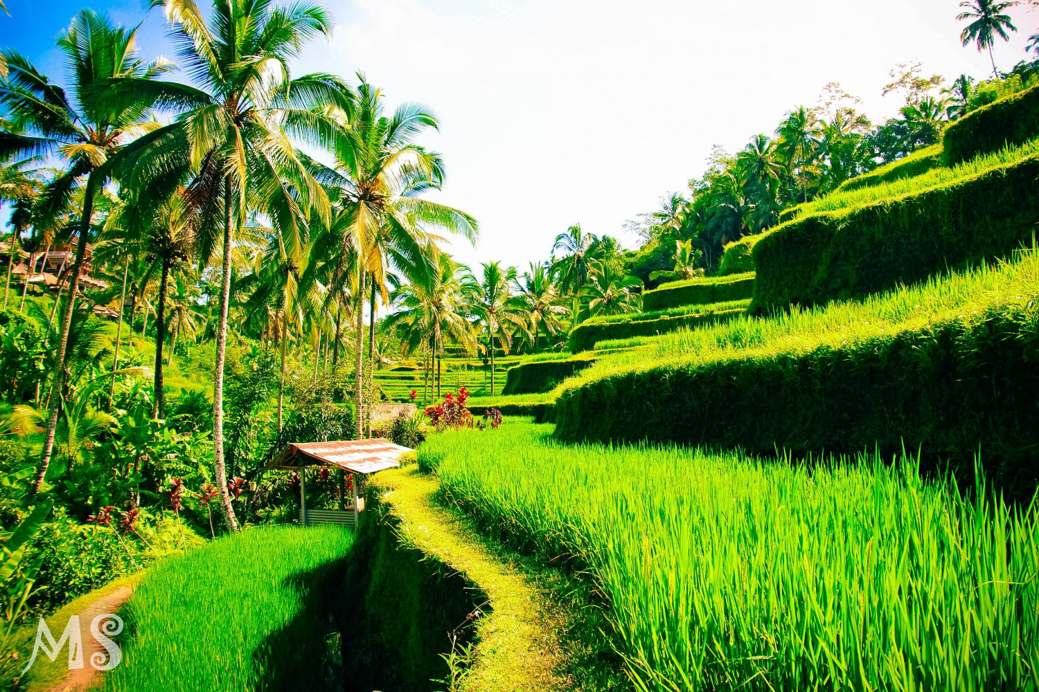 Bali Group Tour Package