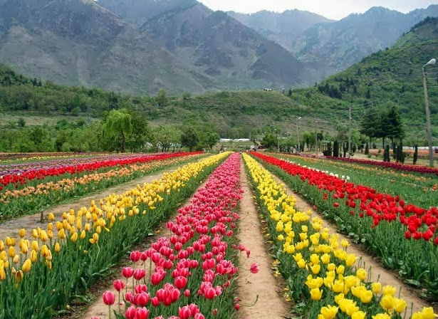 Nature Kashmir Holiday Tour Package