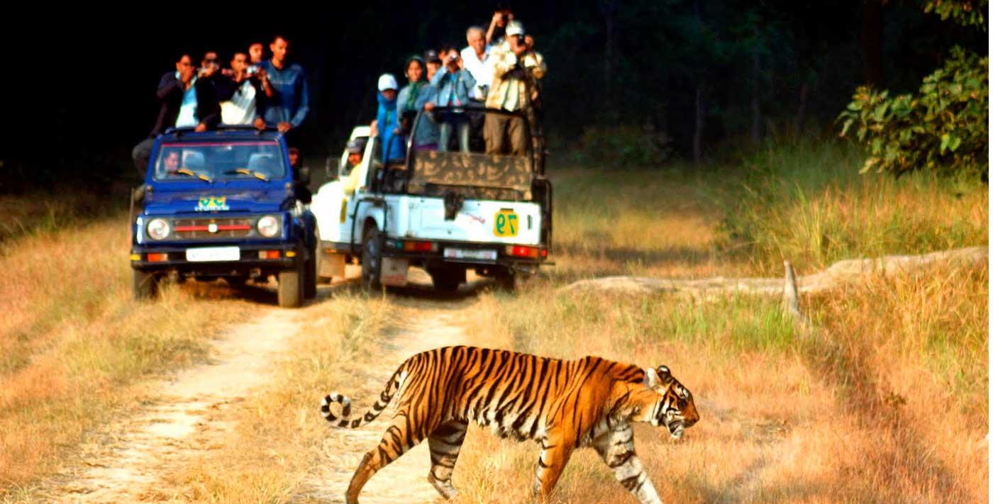 Uttarakhand Forest Travel Package